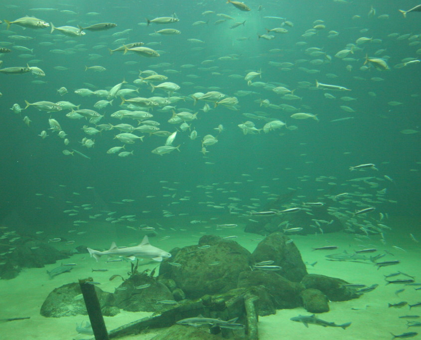 Fish_species
